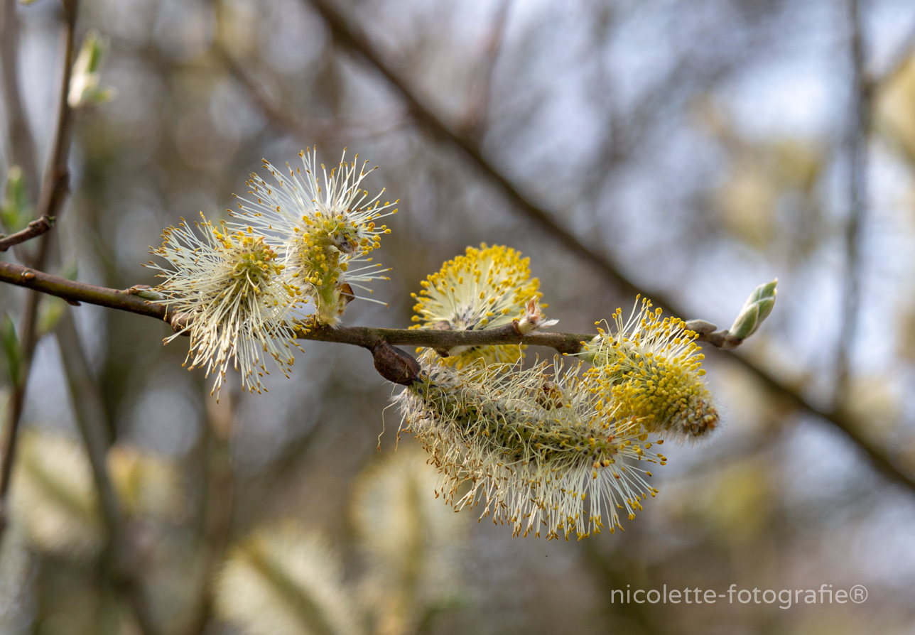 Spring-is-in-the air-nicolette-fotografie